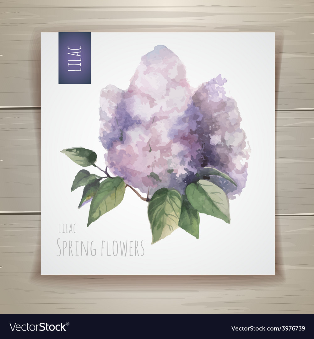 Watercolor flowers Lilac