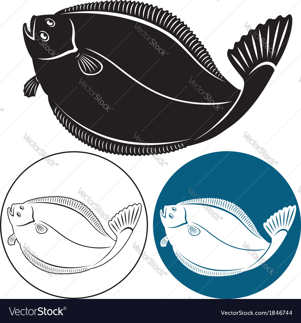 Halibut vector image