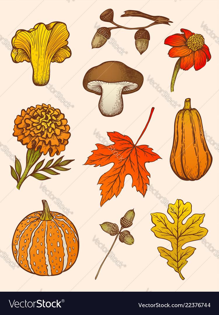 Set mushrooms flowers and leaves