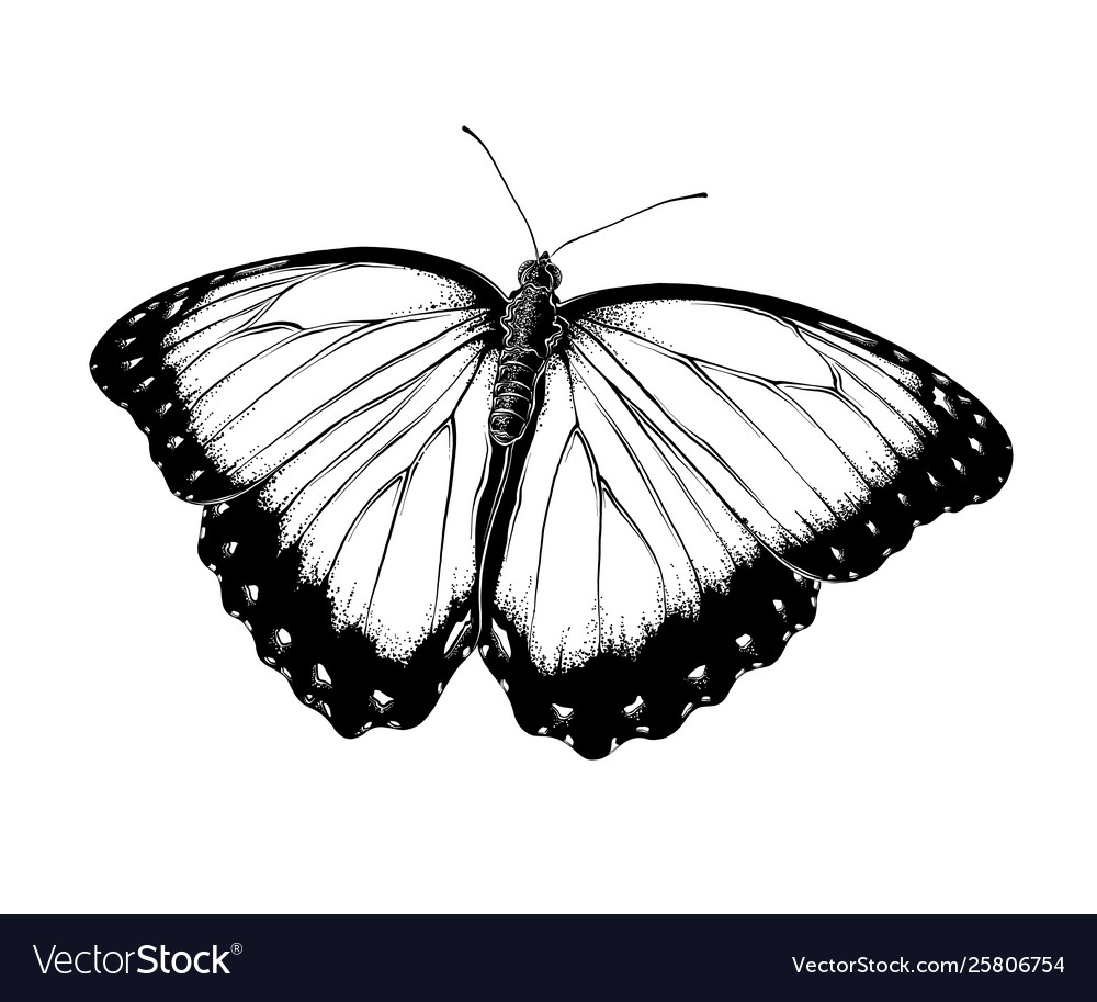 Hand drawn sketch butterfly in black color