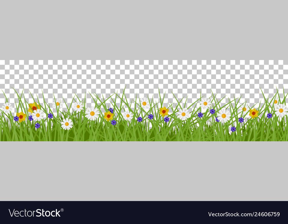 Grass summer background
