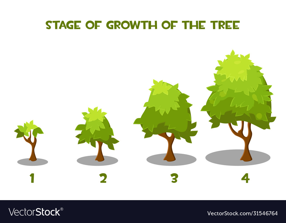 Cartoon Tree Growth Stages Royalty Free Vector Image Find & download free graphic resources for trees cartoon. vectorstock