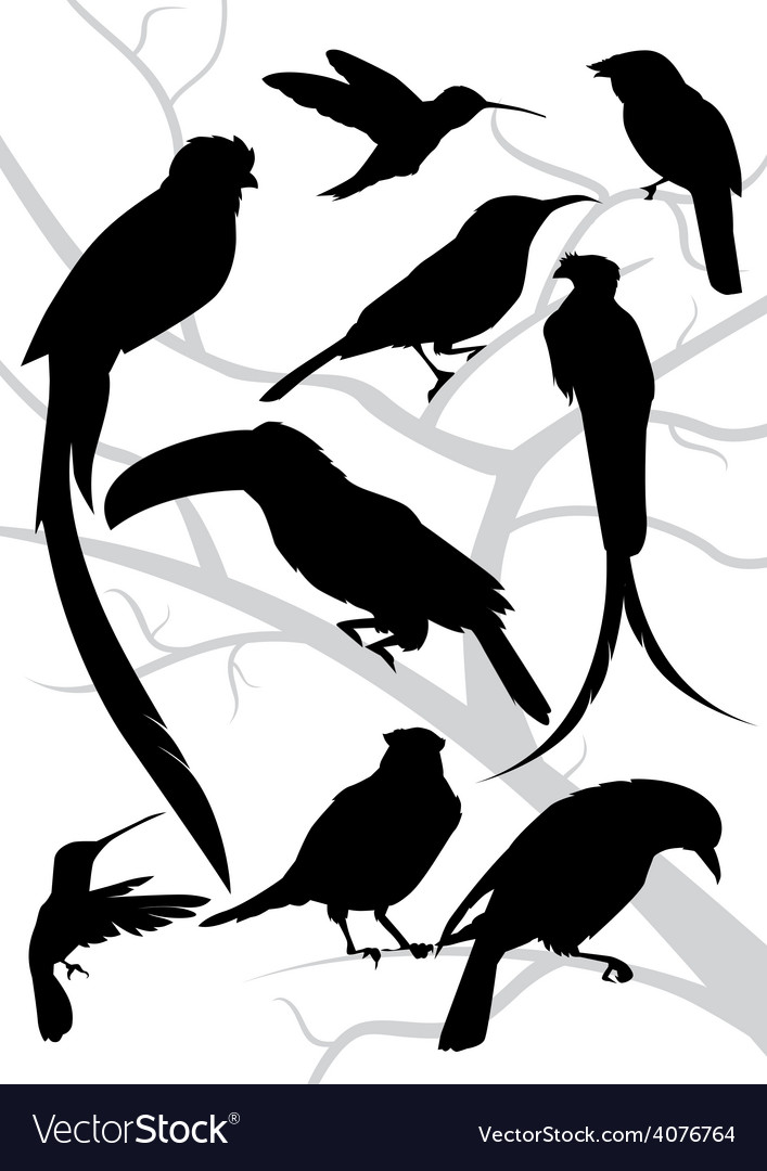Silhouettes of tropical birds