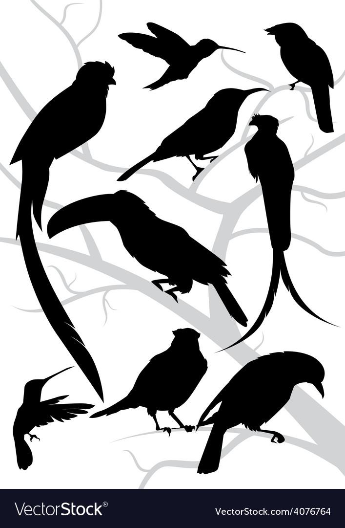 Silhouettes tropical birds