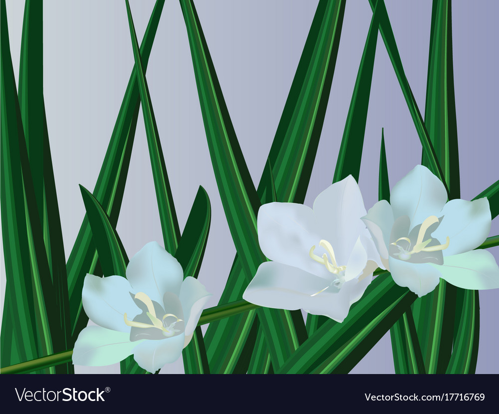 Campanula Bell Flowers Royalty Free Vector Image