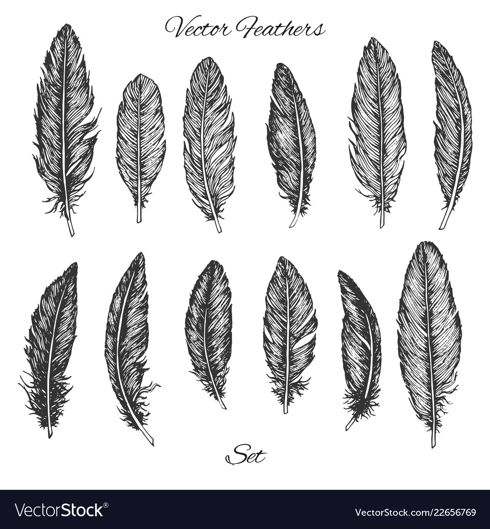 Hand drawn feathers set isolated on white