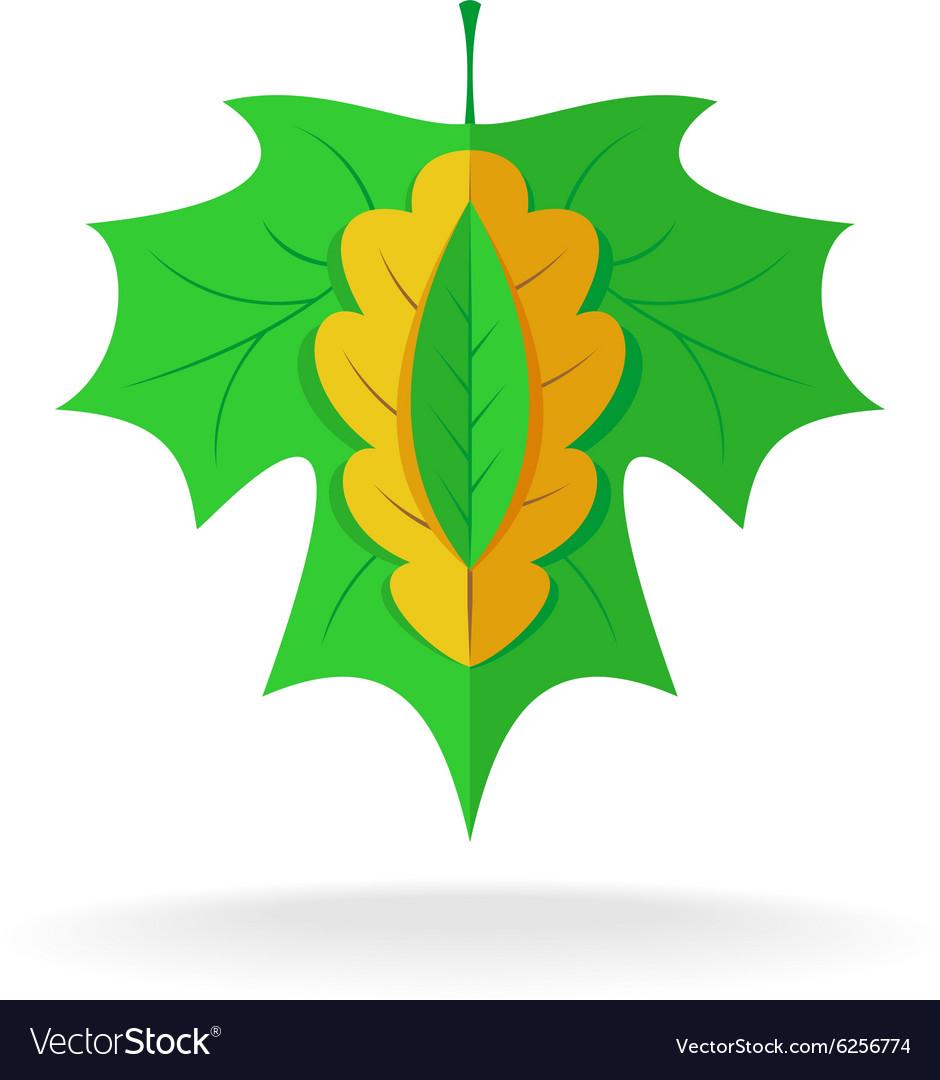 Maple oak and ash tree leaves logo