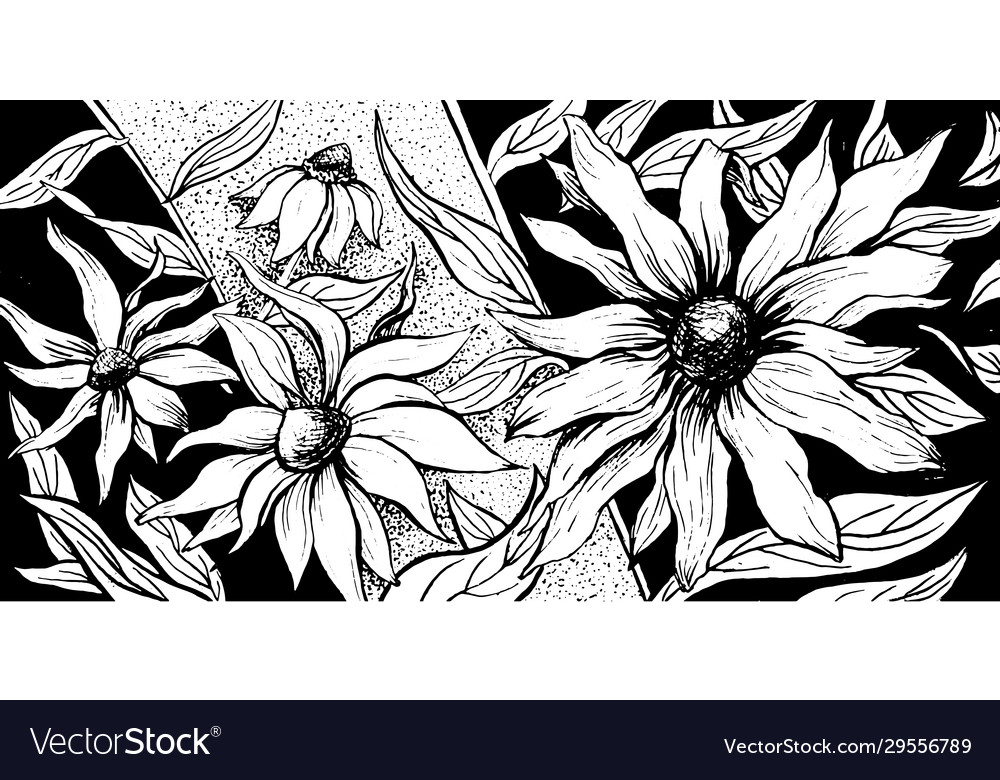 Japanese flower background floral echinacea