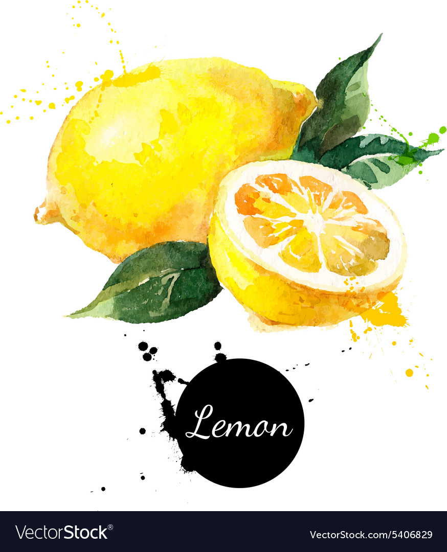 Hand drawn watercolor painting lemon on white