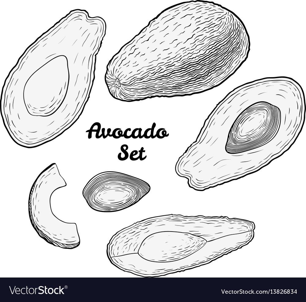 Hand drawn engraved avocado set isolated on white