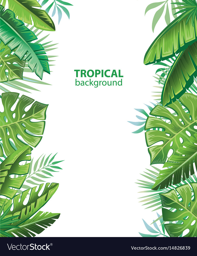 Tropical leaves and plants vector image