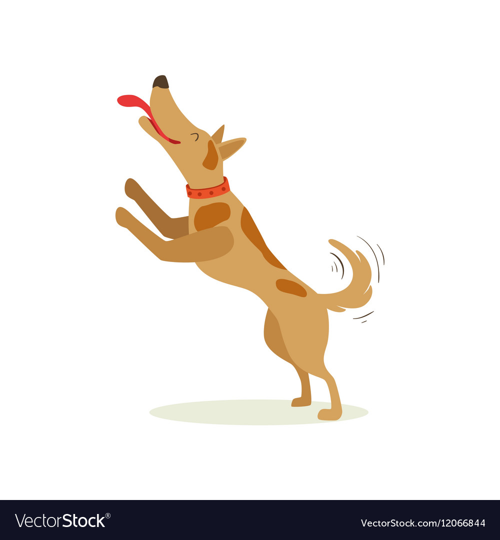 Brown Pet Dog Jumping Licking Face Animal Emotion vector image