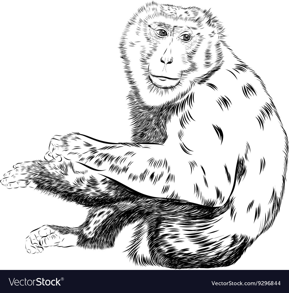 chimpanzee drawing animal artistic use royalty free vector