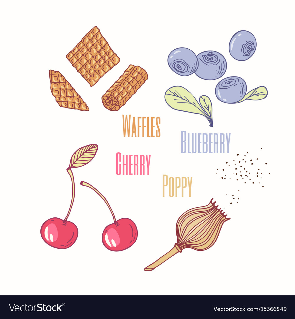 Sweet toppings blueberry cherry and poppy vector image