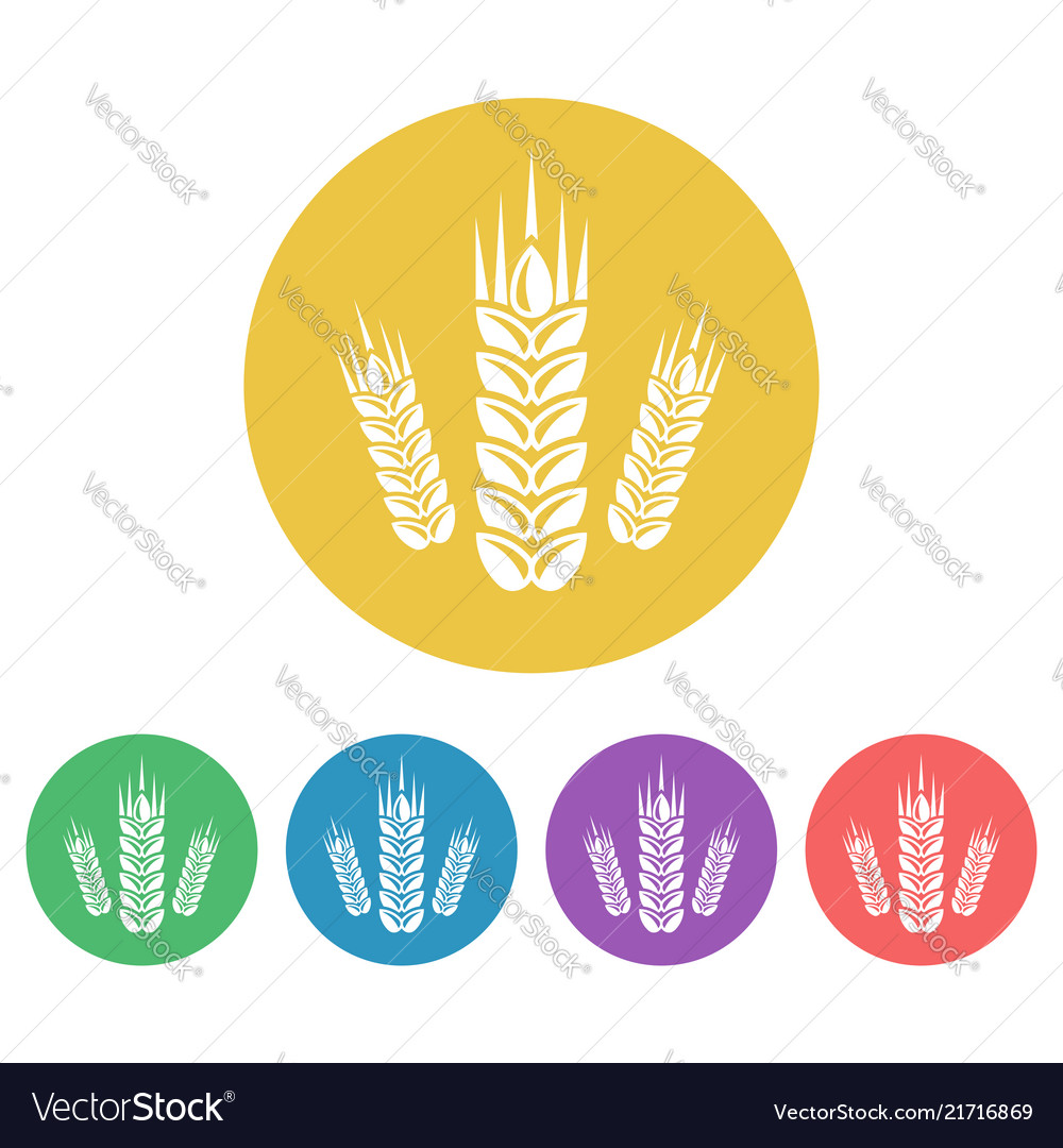 Wheat set of colored round icons