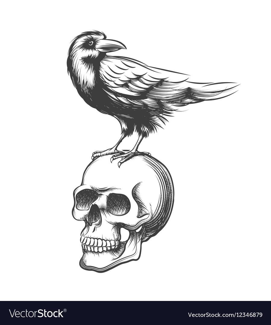 Evil crow hand drawn Black vector image