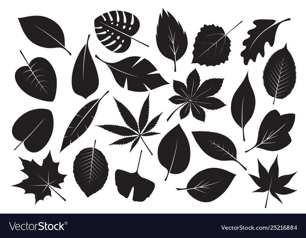Collection black leaves
