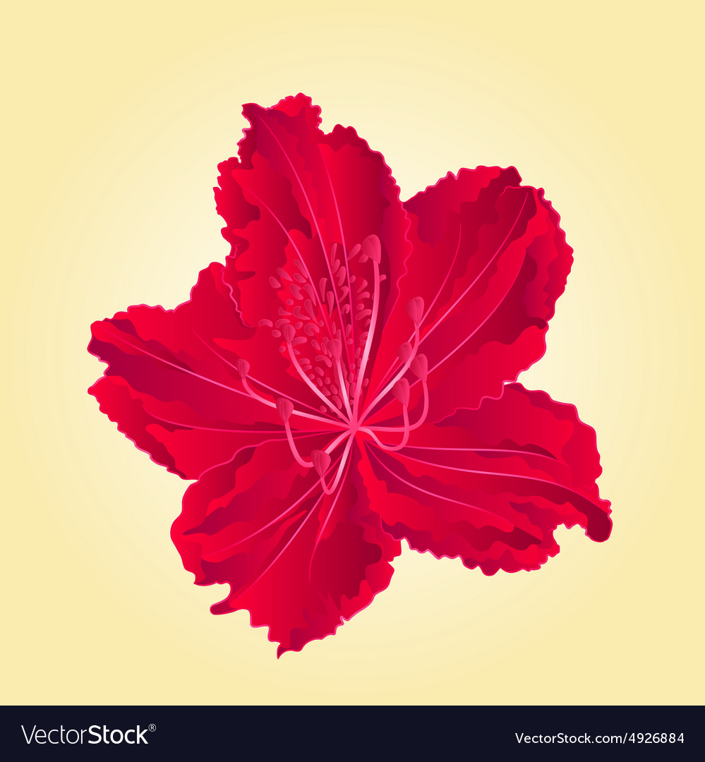 Red flower simple rhododendron