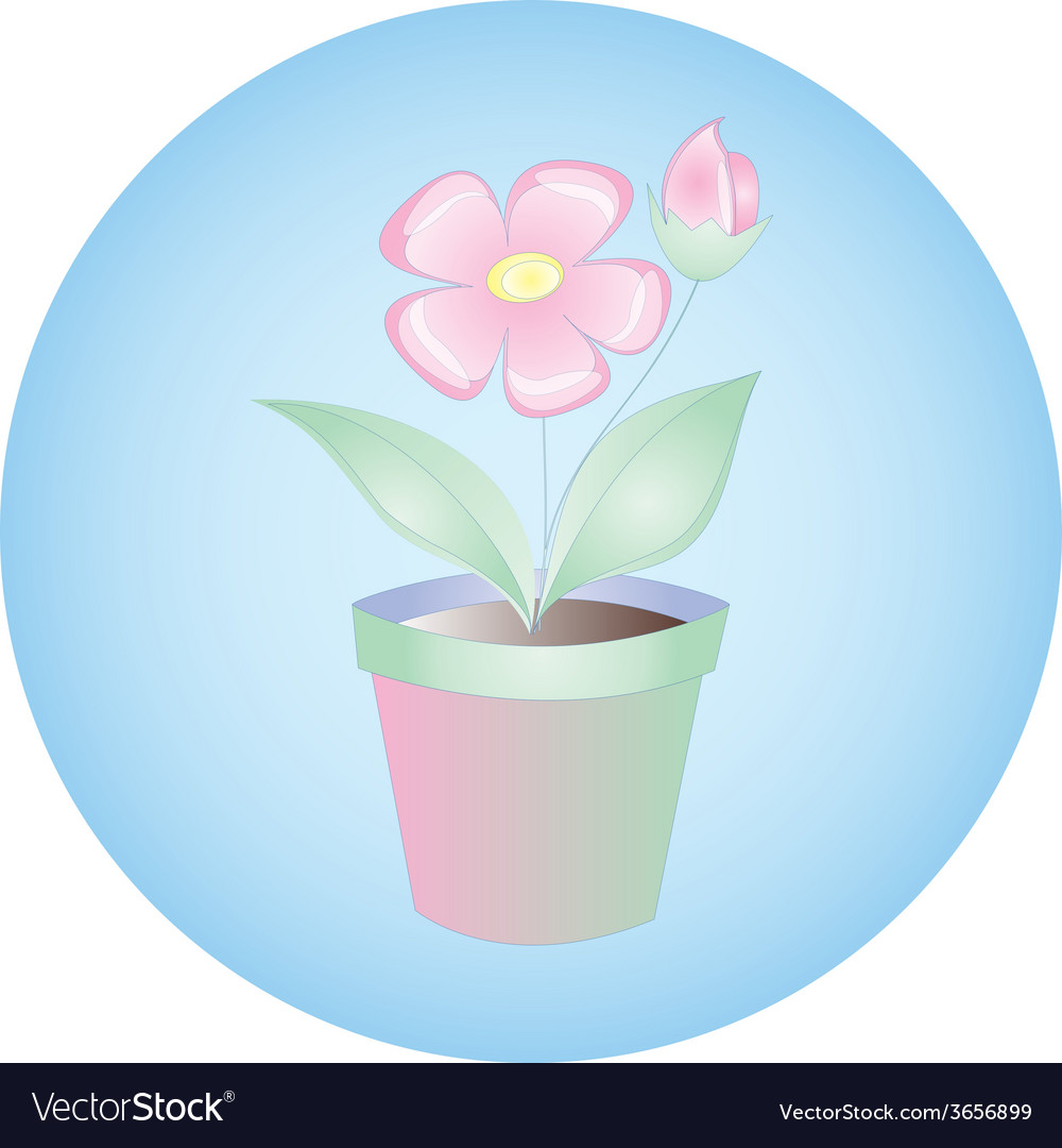 Plant flowers in pot on blue background
