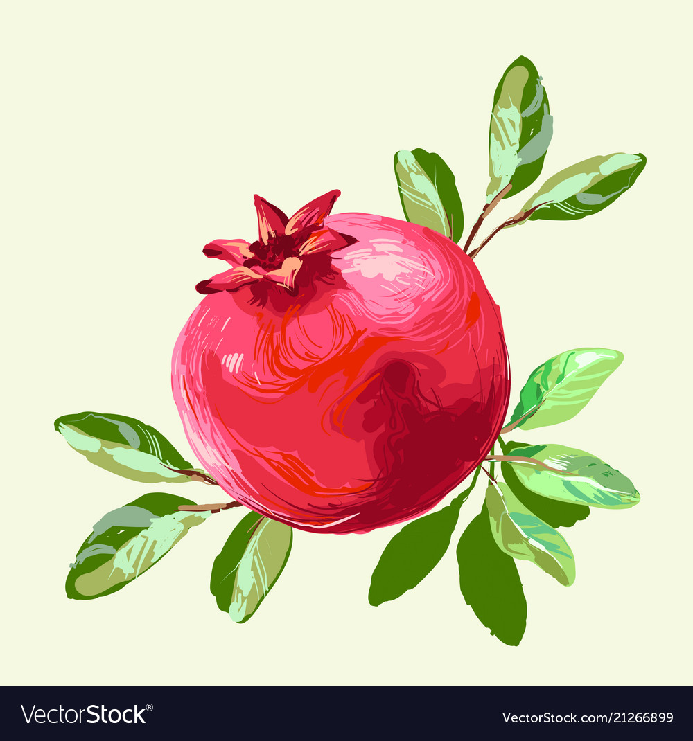 Pomegranate with leaves fresh fruit drawing