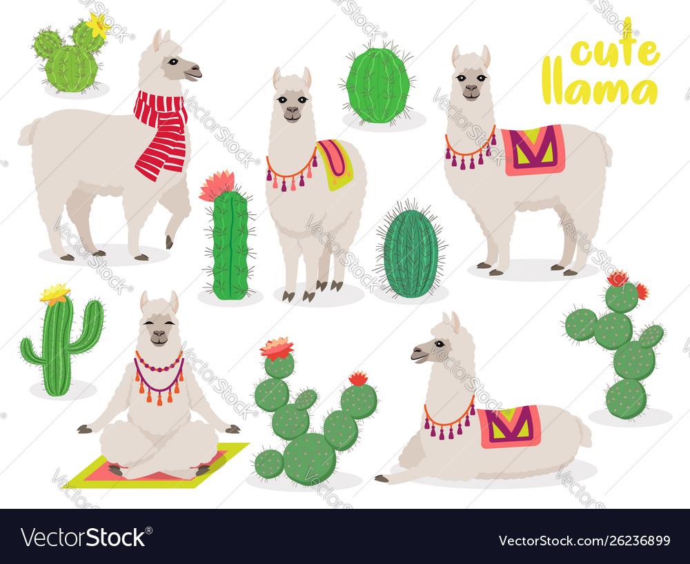 Set cute llamas in different poses desert