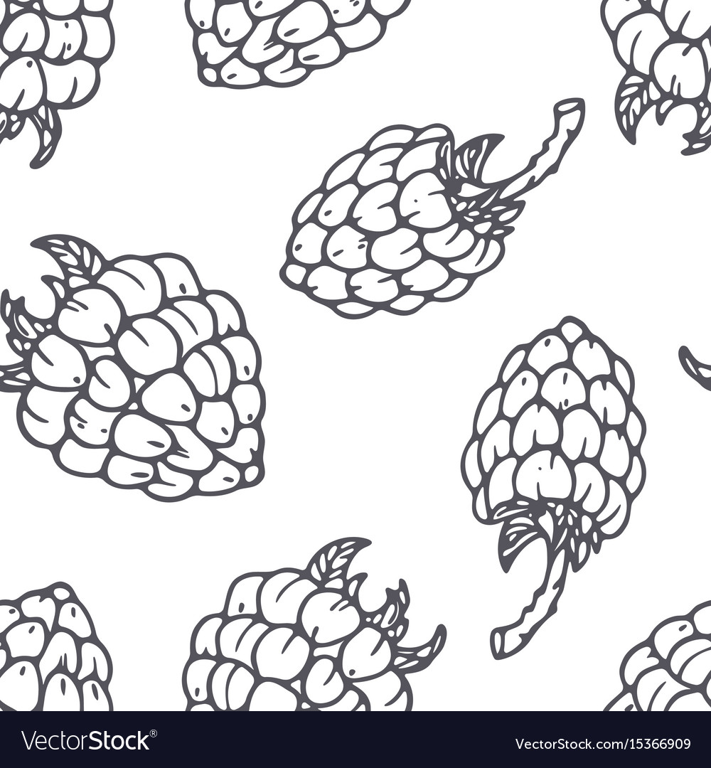 Hand drawn outline seamless pattern with raspberry