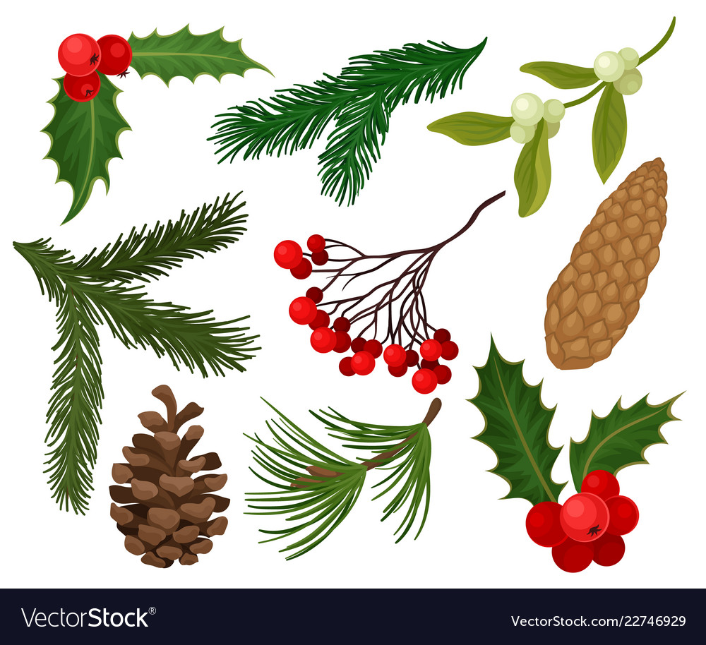 Flat Set Of Christmas Plants Holiday Royalty Free Vector