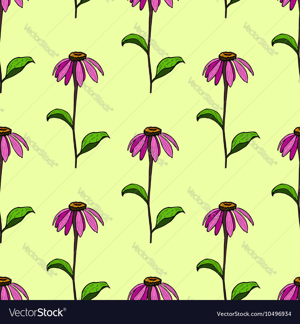 Seamless pattern from flowers Echinacea