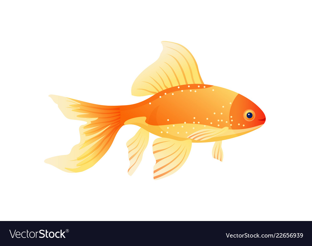 Golden fish isolated on white background poster