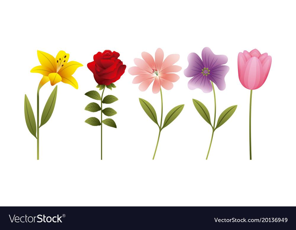 Daisy Tulip Flowers Decoration Vector Image