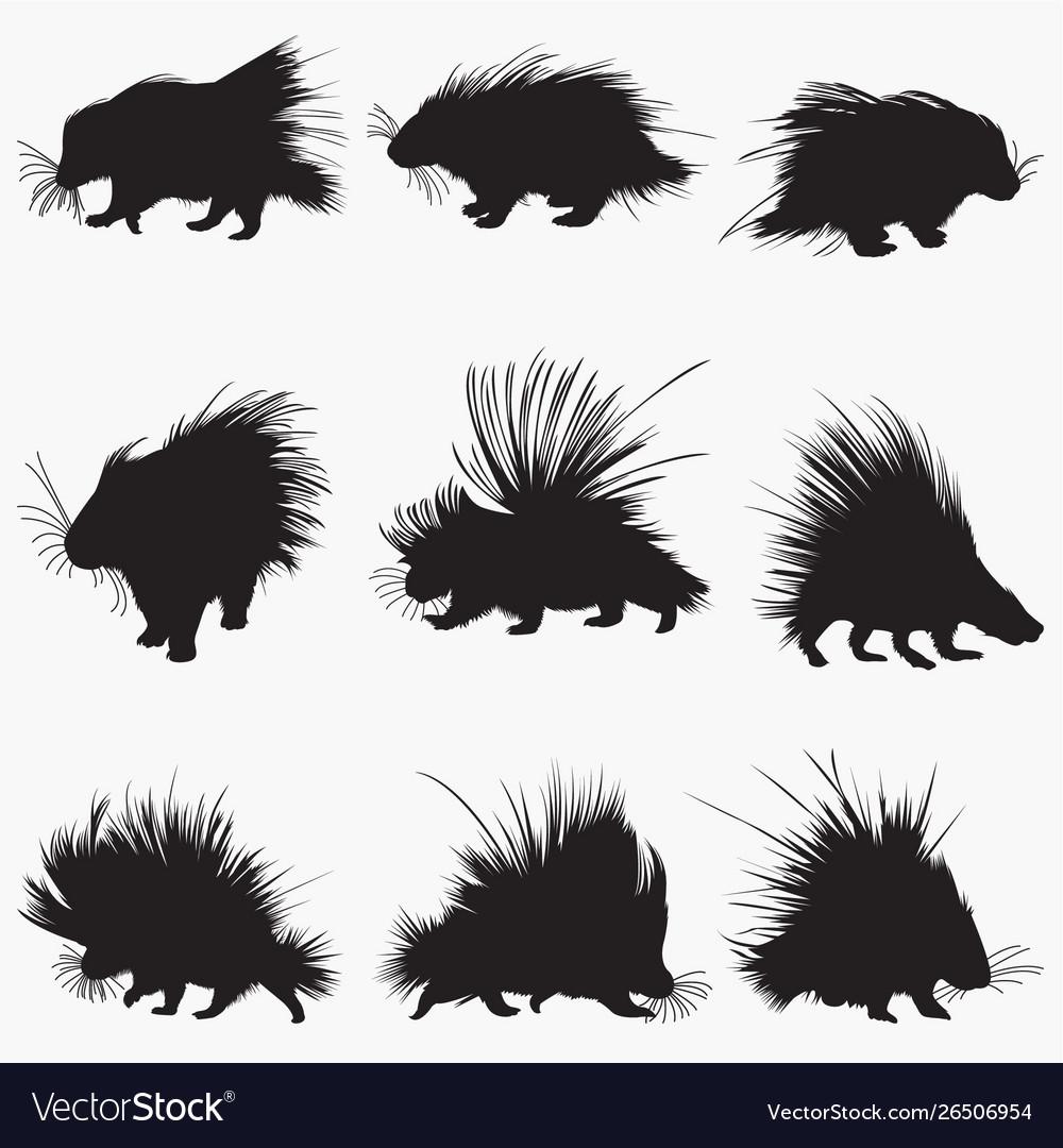 Porcupine silhouettes