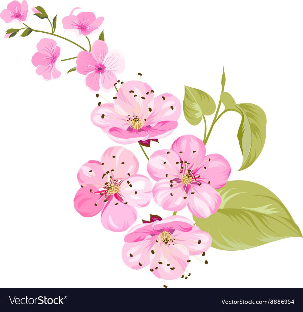 Sakura flowers Spring background