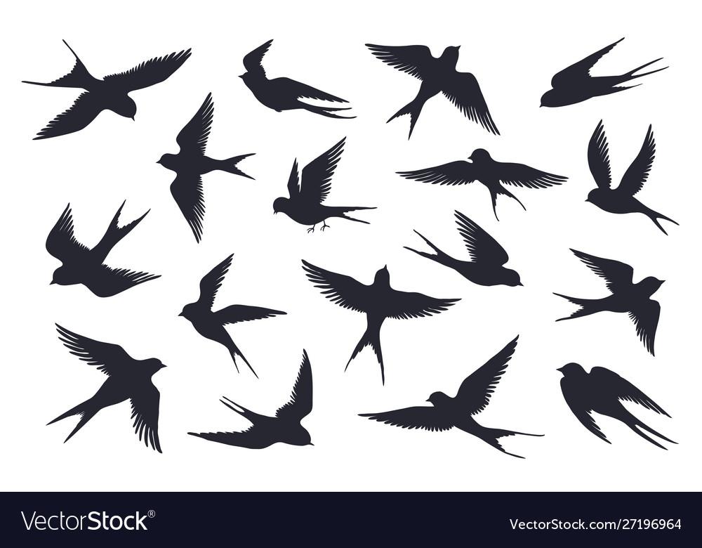 Flying birds silhouette flock swallows sea