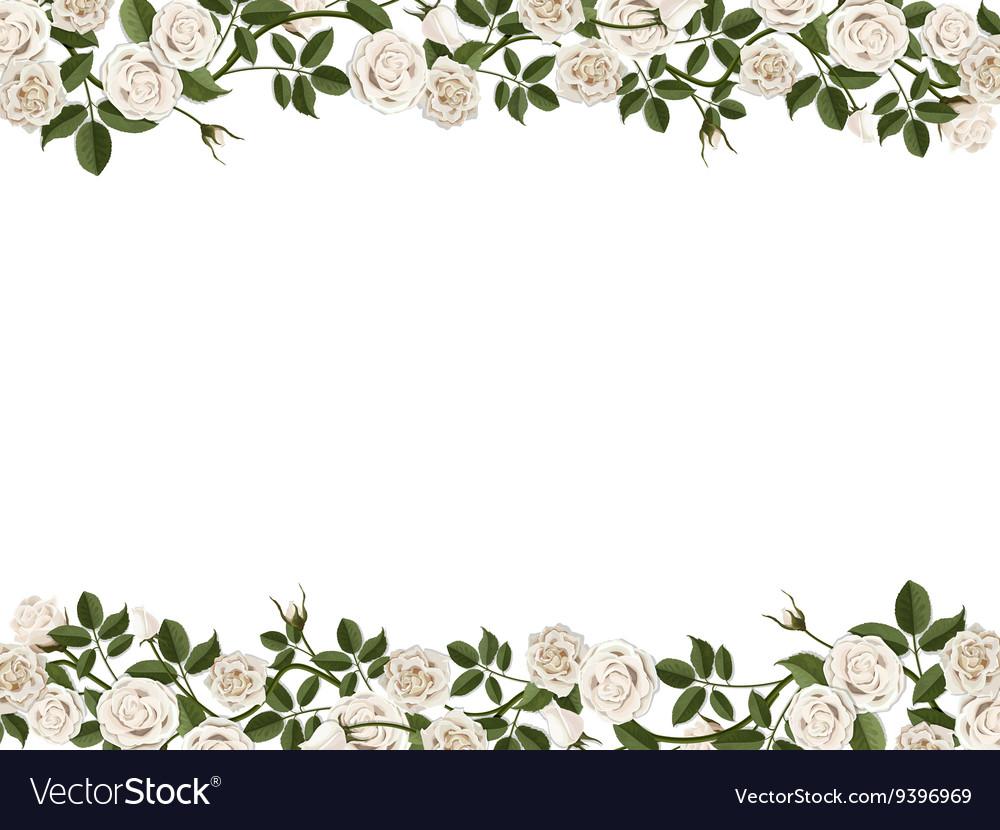 Border of white roses vector image