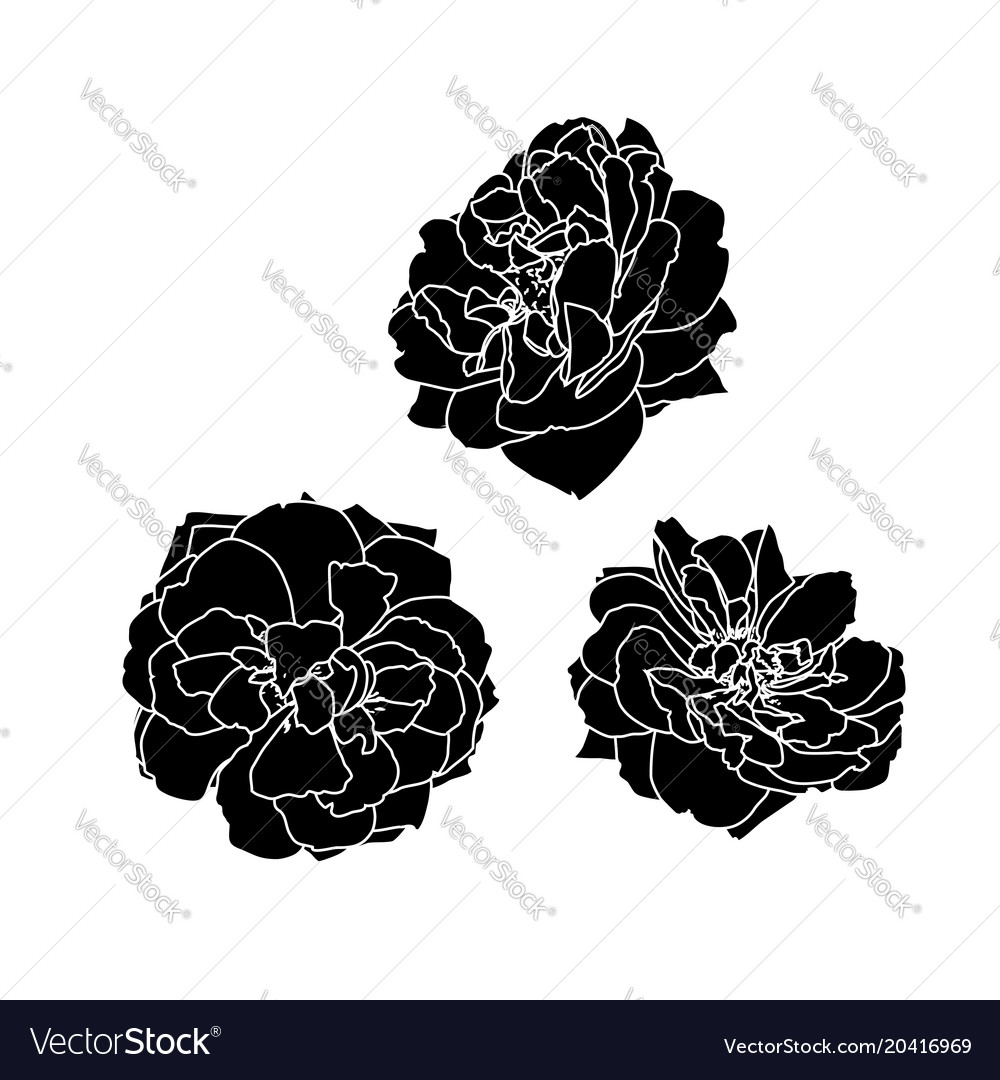 Set three black silhouettes rose