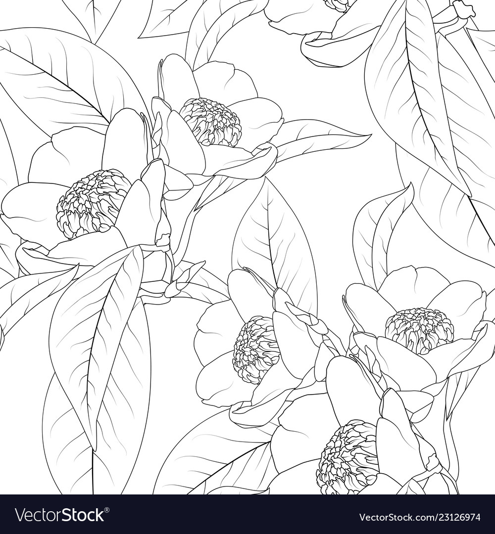 Camellia flowers bouquet with leaves line design