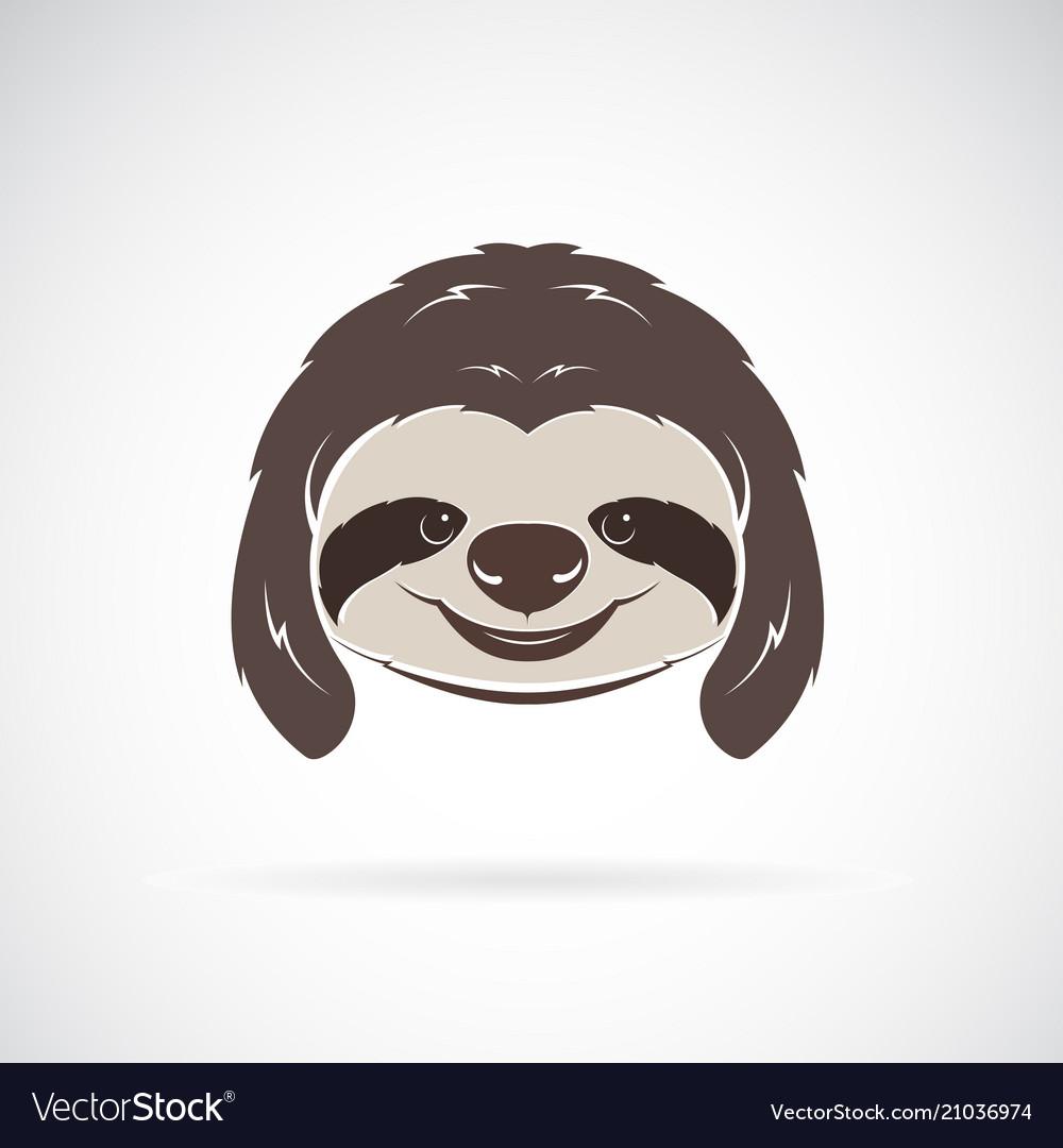 Sloth head on white background wild animals vector image