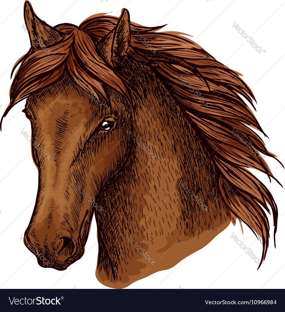 Brown graceful horse portrait