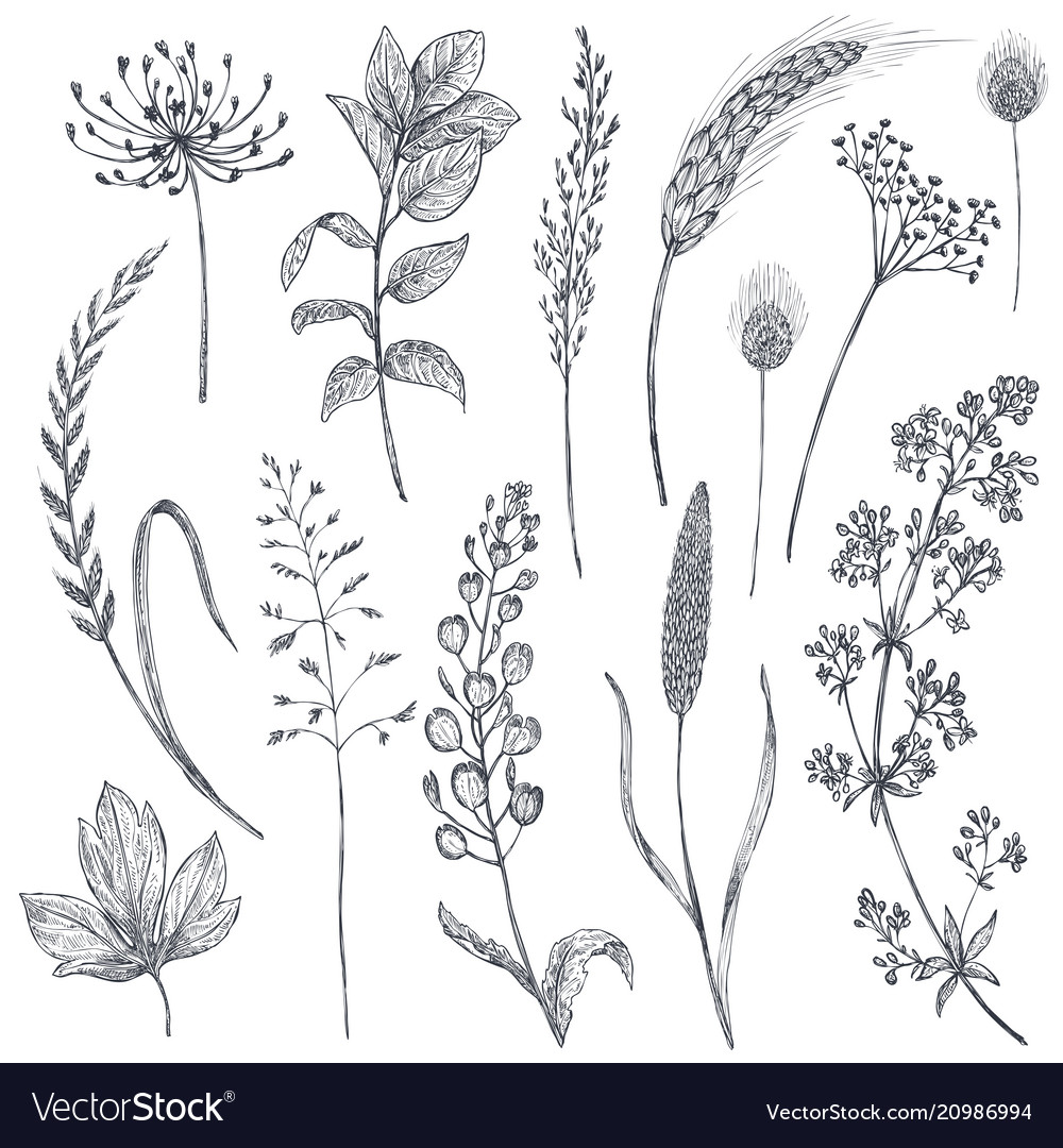 Set of herbs and flowers hand drawn
