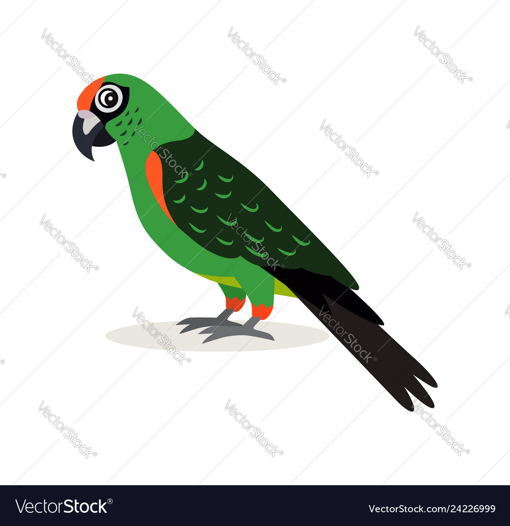 African animal colorful green parrot lovebird