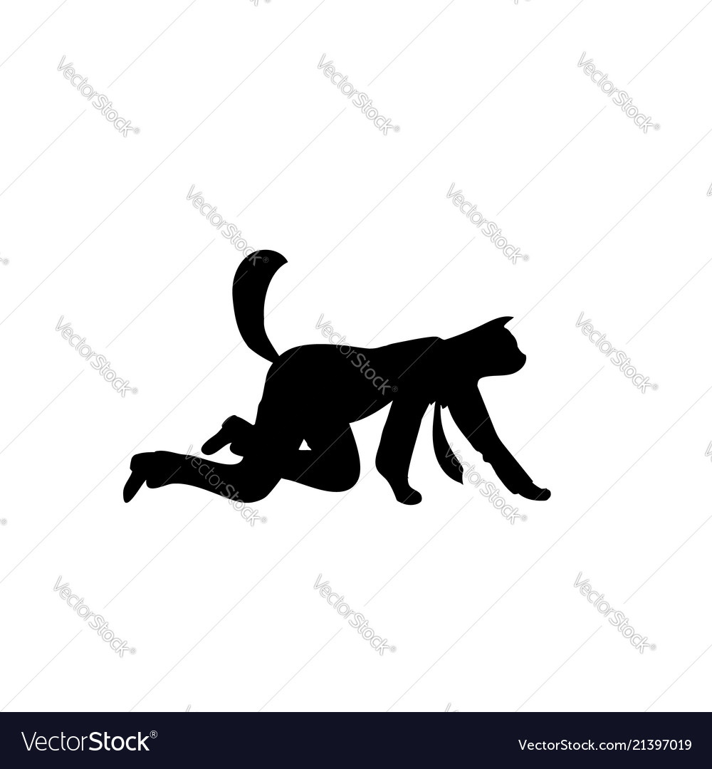 Silhouette cat business isolated animal go on all