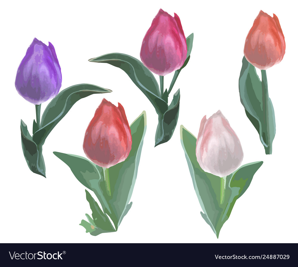 Beautiful tulips - objects isolated