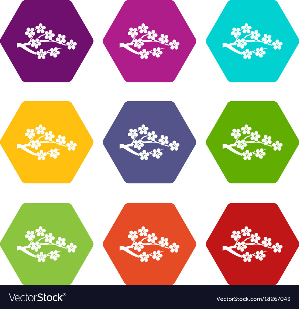 Sakura icon set color hexahedron vector image