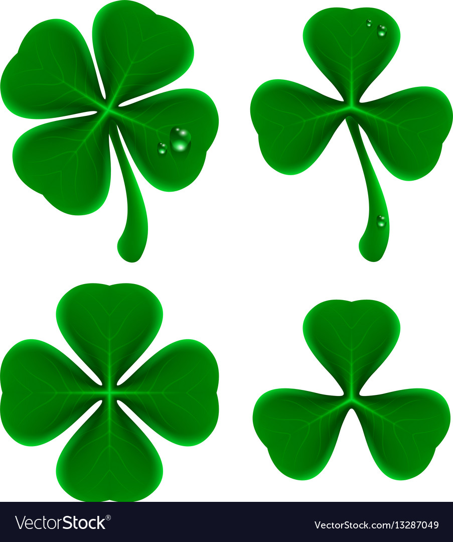 Set Of Green Leaves Of Clover Shamrock And Vector Image