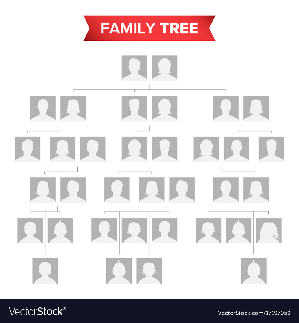 genealogical tree blank family history royalty free vector