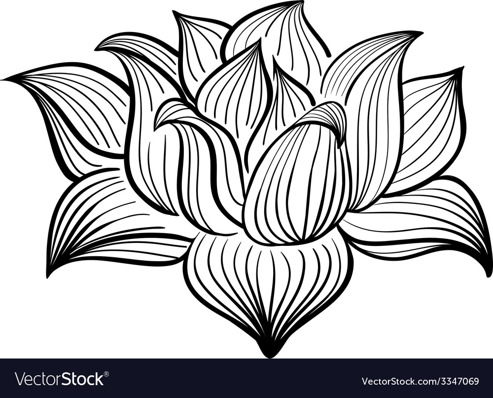 Black and white lotus flower royalty free vector image black and white lotus flower vector image izmirmasajfo