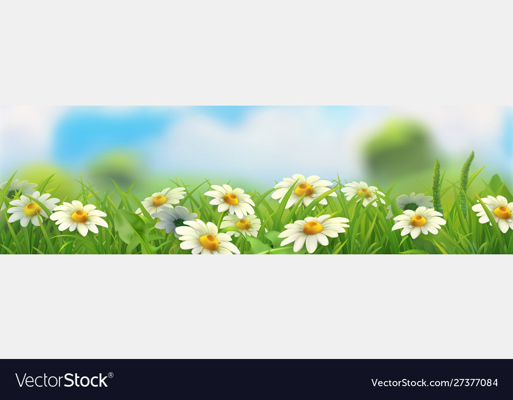 Spring landscape green grass and chamomile 3d
