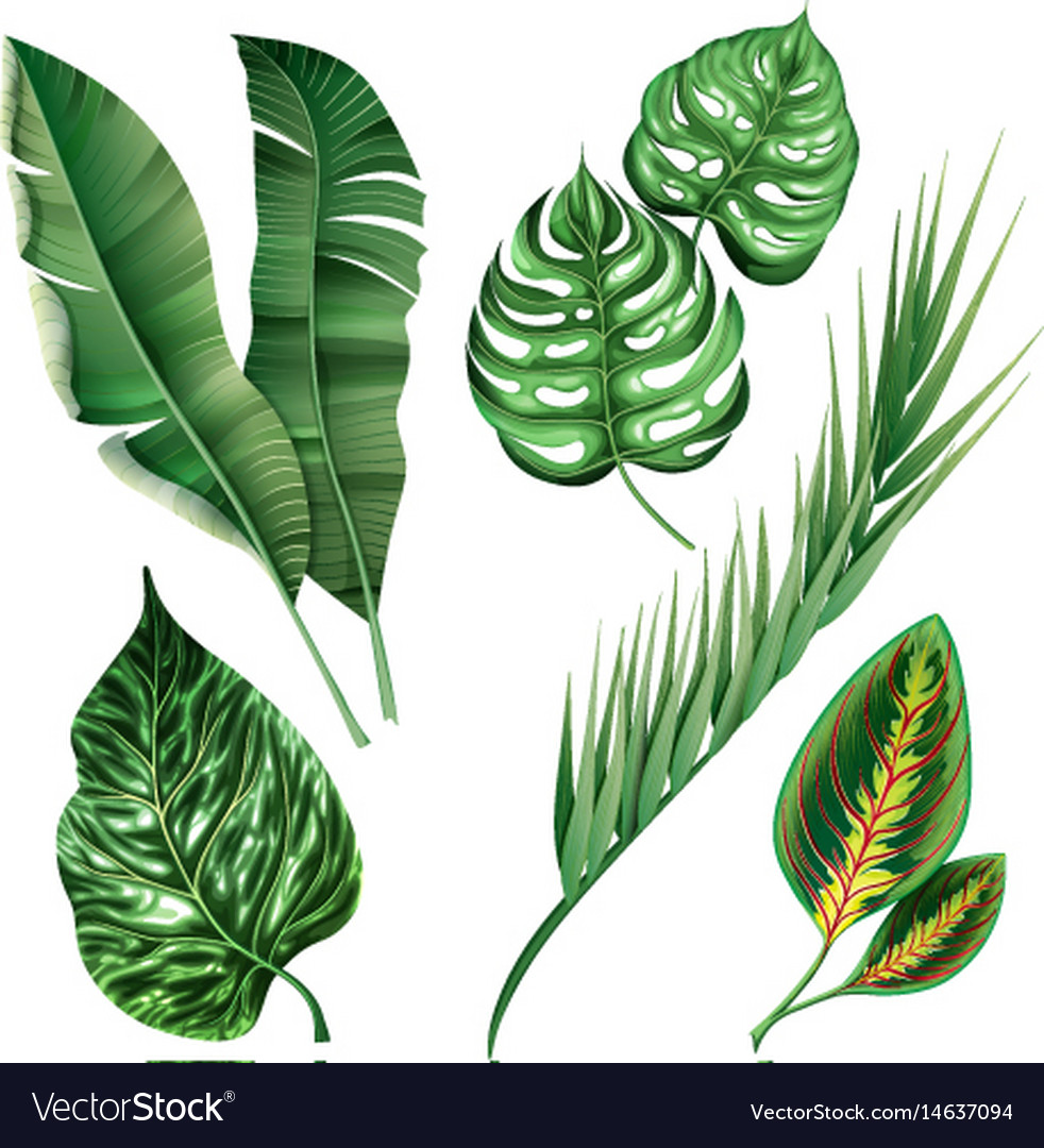 Realistic tropical botanical foliage plants set