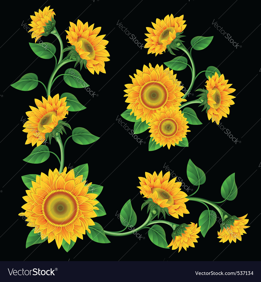 yellow sunflowers on the black background design e vector 537134