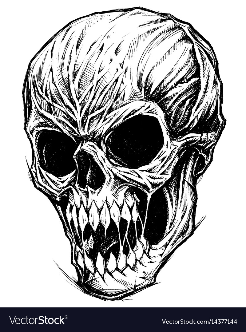 Skull drawing line work